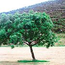 Lone Tree, Donegal, Ireland by Shulie1