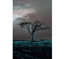 Rihanna Tree, Angry Photographic Print