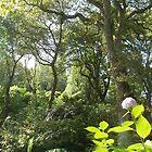 Abbotsbury Sub Tropical Gardens by Frances Knight