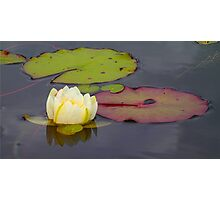 Lilly Pad Photographic Print