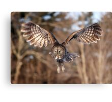 Great Grey Owl swoops down Canvas Print