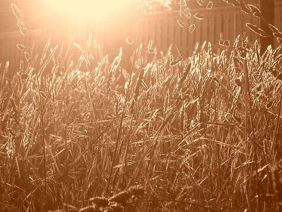 golden light by Dani Di Cesare