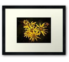 Ligularia Framed Print