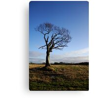 The Rihanna Tree, Alive! Canvas Print