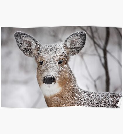 I hate snow! - White-tailed Deer Poster