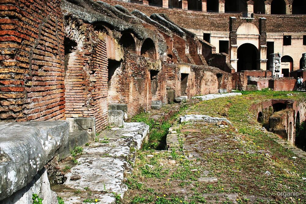 Inside the Roman Colliseum/Roma, Italy by organic