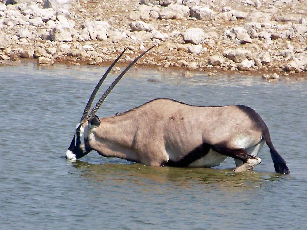Oryx Drinking by tj107