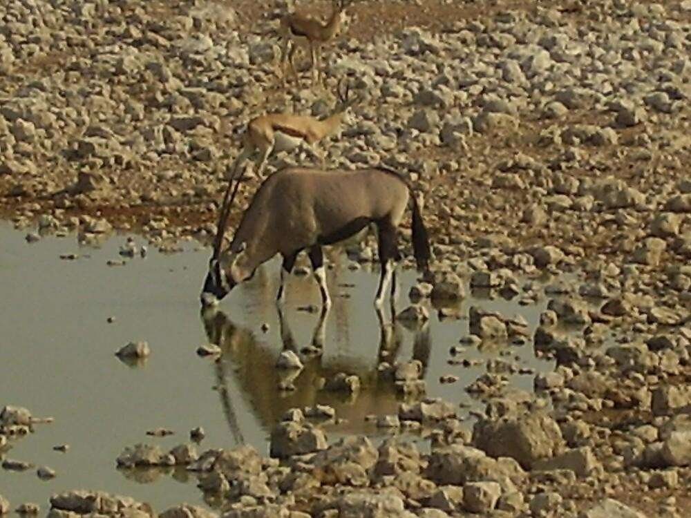oryx(gamesbok)ang springbok by mj007