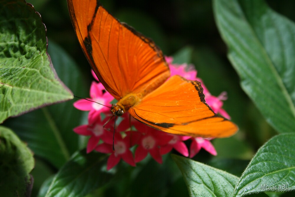 butterfly nectar by Monica31