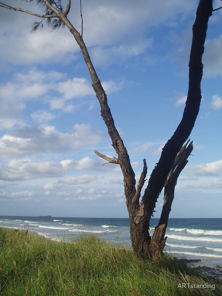 Lone Tree, Alexandra Headland by ARTstanding