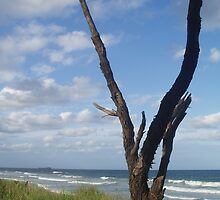 Lone Tree, Alexandra Headland by ARTstanding