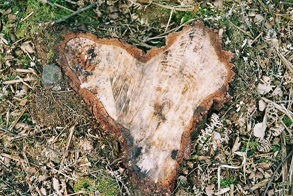 Love Tree Stump by moseszap