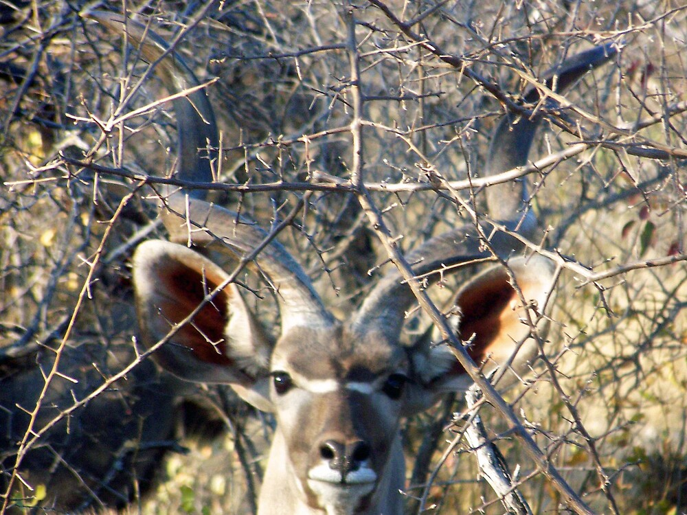 Kudu Face by tj107