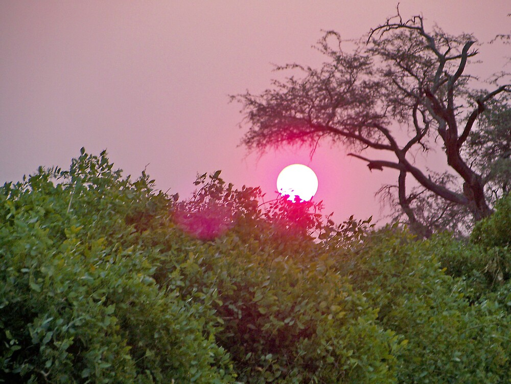 Sun Setting by tj107