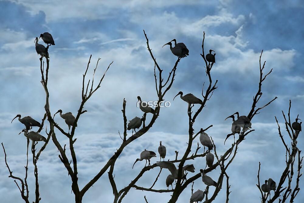 The Toronto Tip Tree Birds by rossco