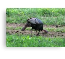Eastern Wild Turkey Canvas Print