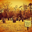 """""""Bubble Hill Cemetery""""... prints and products by © Bob Hall"""