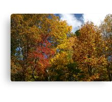Autumns Splendor II Canvas Print
