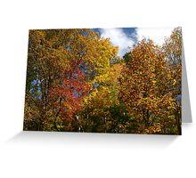 Autumns Splendor II Greeting Card