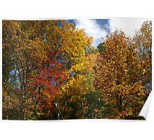 Autumns Splendor II Poster