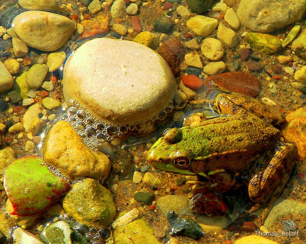 Froggy by Thomas Sielaff
