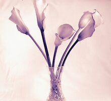 Arum Lillies by spemj