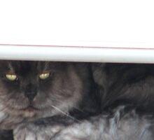 Bashfull Kitty by Brad Sumner