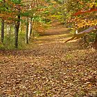 An Autumn Trail by John Butler
