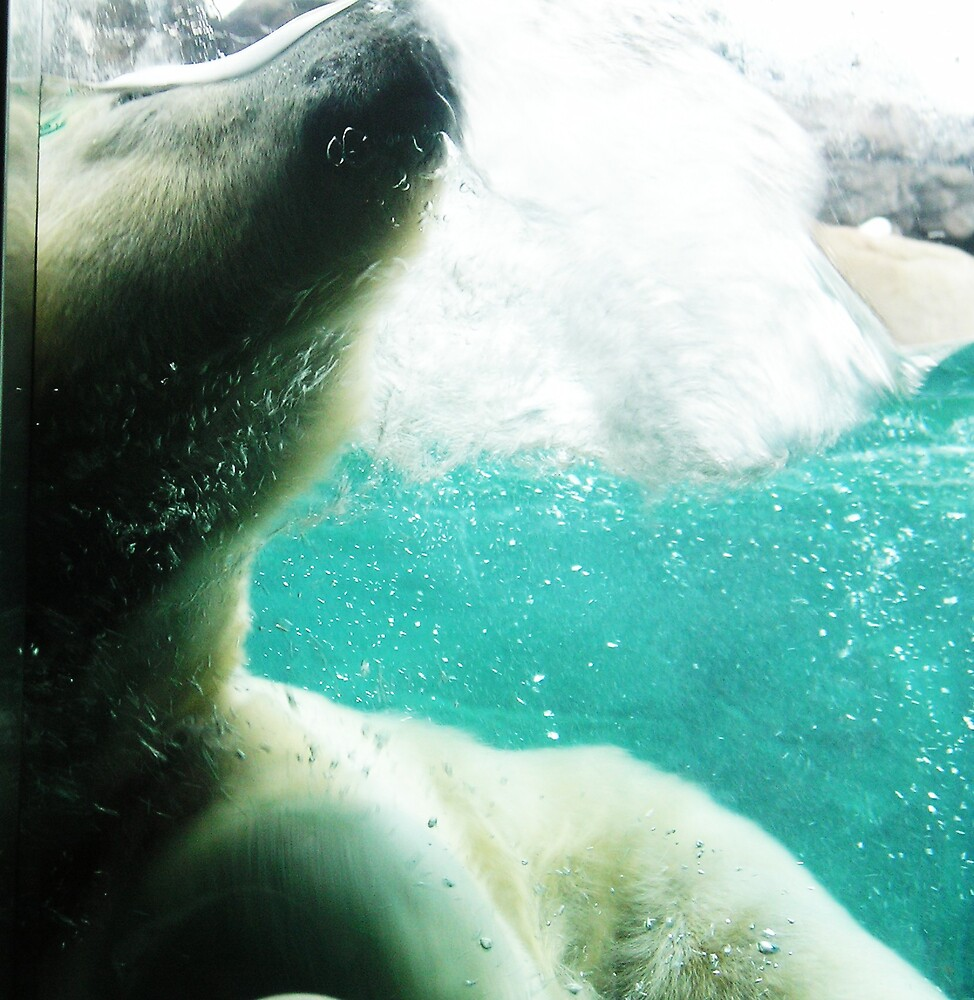 Underwater Polar Bear by Kate456