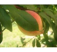 peaches for me Photographic Print