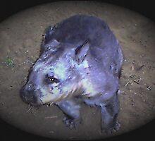 Wombat by Sarah Harvey