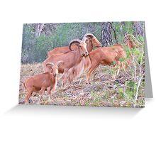 Arrui Group Sierra Espuna Greeting Card