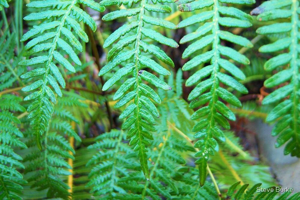 Foliage by Steve Burke