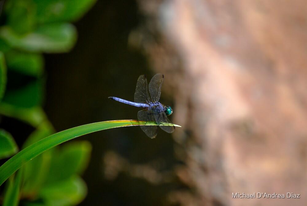 Blue Dragon by Michael D'Andrea Diaz