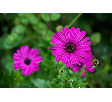 Bright Purple Flowers Photographic Print