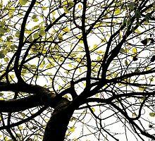 Tree by Tom Gliss