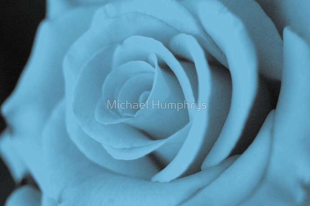 Cyan Rose by Michael Humphrys