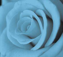 Cyan Rose by Michael Humphrys