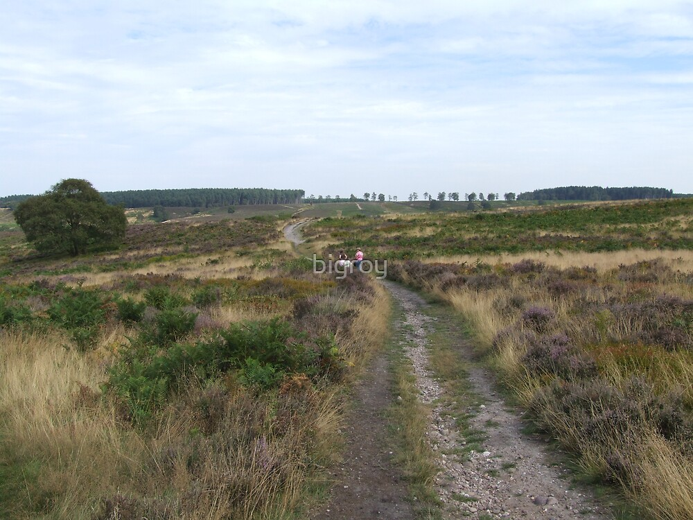 Cannock Chase  by bigroy