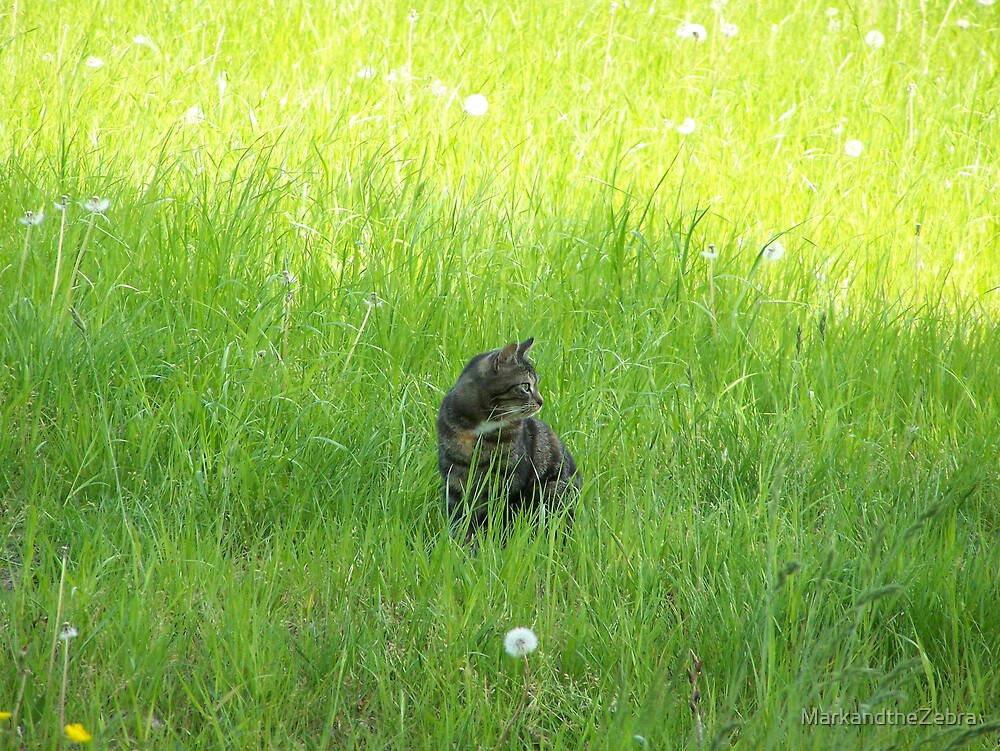 Cat in the grass by MarkandtheZebra