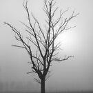 Creeping Mist - Tongala Victoria Australia by Norman Repacholi