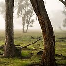 Bow to your partner - Tongala, Victoria, Australia by Norman Repacholi