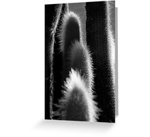 Cactus Greeting Card