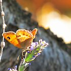 Butterfly at Sunrise by HolidayMurcia