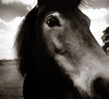 Pony by Rob Corbett