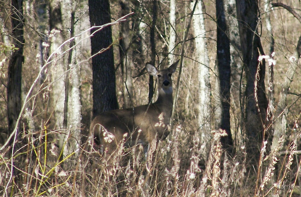Deer in Tennessee by Lorrie