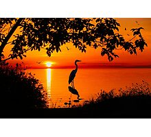 Heron at Sunset  Photographic Print
