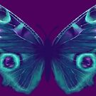 Purple and Teal Butterfly by Rachel Anderson