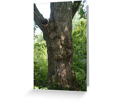 Tall Knotty Maple Greeting Card