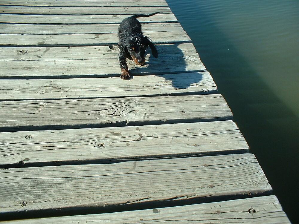 Wet Dog by Joseph Klatka